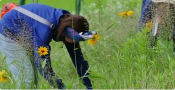 草刈り イメージ