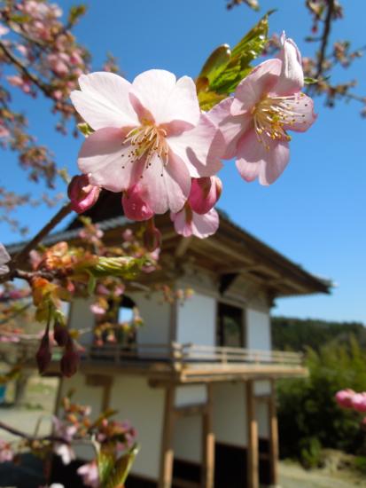 メルマガ「桜ライン311Letter」募集開始のお知らせ