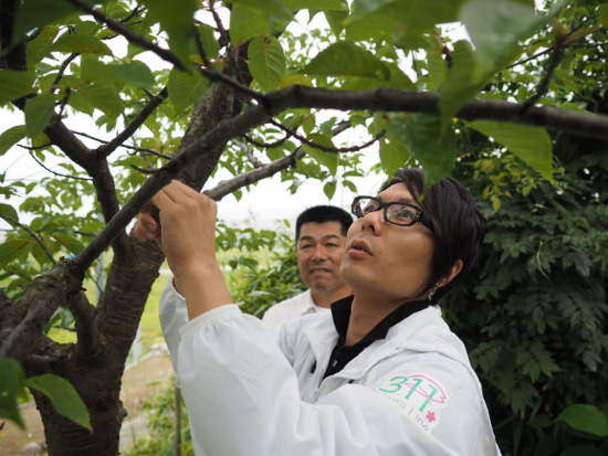 一緒に桜ラインを創っていくSTAFFを募集しています!