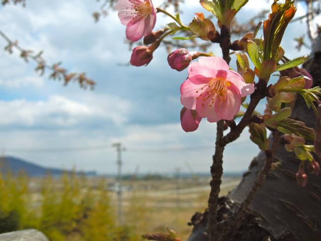 桜ライン311マンスリーサポーターを開始させて頂きました。