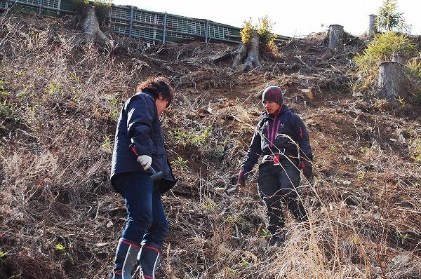 [受付完了]2014年「さくら並木ネットワーク様との合同植樹会」ボランティア募集のお知らせ