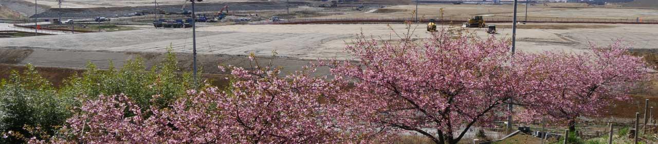 桜ライン311について イメージ